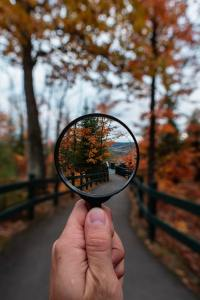 tree-lined path viewed through magnifying glass